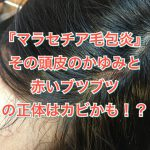 『マラセチア毛包炎』その頭皮のかゆみと赤いブツブツの正体はカビかも!?